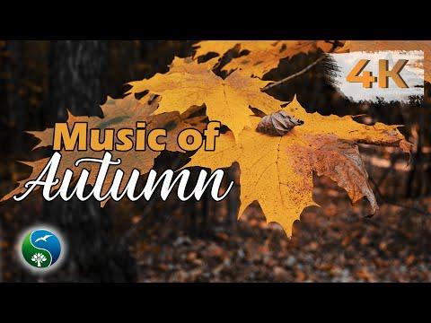 🍁 Осенние Пейзажи в Осеннем Лесу | Красивая Осень | Видео для Релаксации и Отдыха в 4K Ultra HD