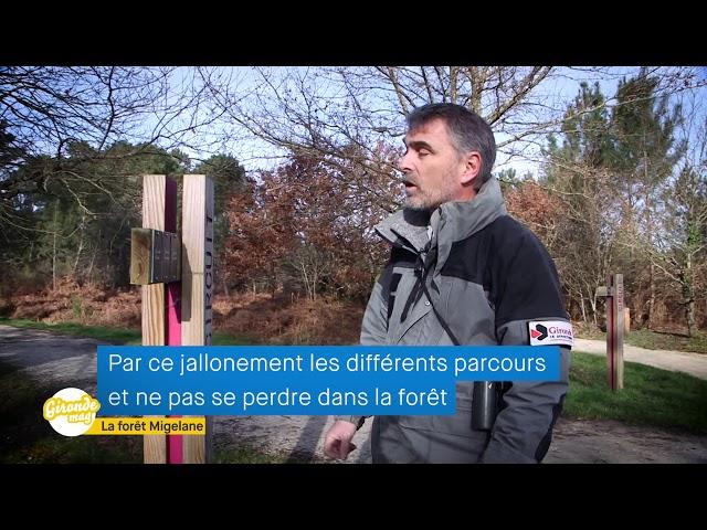 Gironde Mag' - Forêt de Migelane
