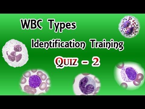 WBC Identification Training Quiz ( Part 2/3 ) - YouTube
