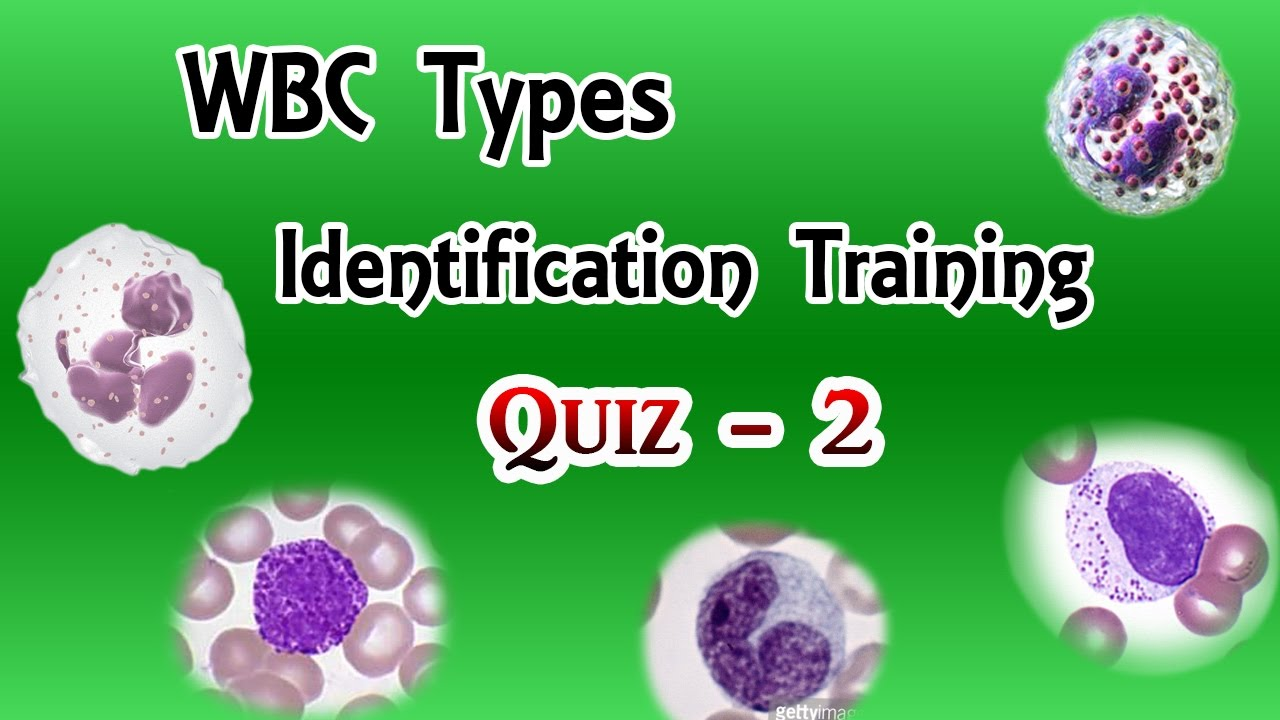 WBC Identification Training Quiz ( Part 2/3 )
