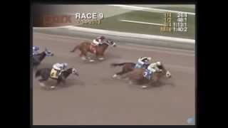Navy Cross - 2013 Parx Maiden Claiming Race - Sixth Place Finish