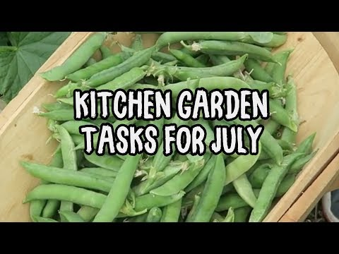 Vegetable Gardening Tasks for July in the Kitchen Garden