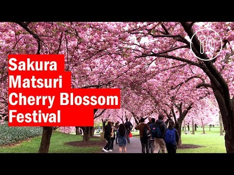 Cherry Blossom Festival at the Brooklyn Botanic Gardens