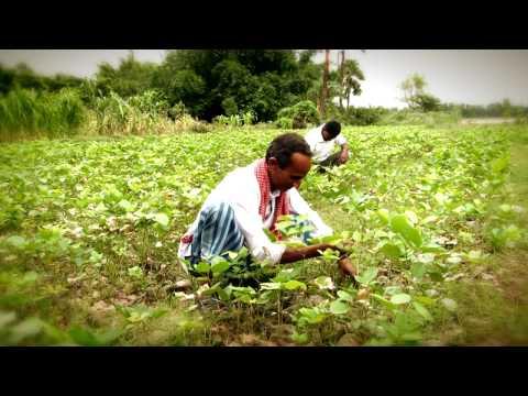 Access to entitlements- Green Leaf Energy Pvt  Ltd