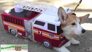 Собаки и Кошки в Нарядах! Смешные животные в одежде