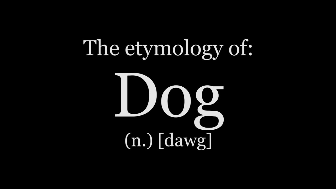 etymology of dog