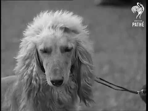 Dog Lovers! 1931