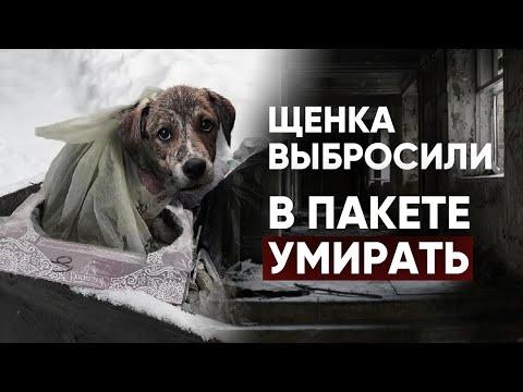 Спасли Умирающую Собаку. Измученный Щенок. Жестокое Обращение С Собакой. Приют Для Животных.