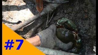 Miền Tây Dân Dã: Bắt cua bằng móc sắt trong rừng ngập mặn Cà Mau