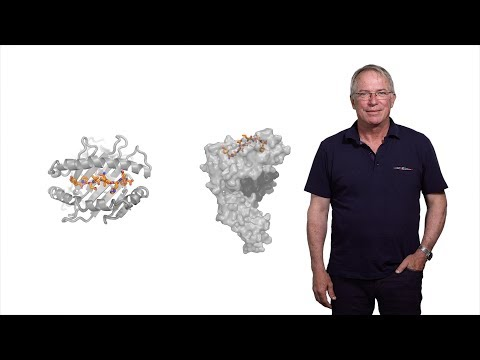 Hidde Ploegh (Boston Children's Hospital) 1: Immunology: The Basics of Antibody Diversity