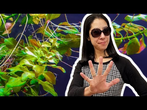 5 Things I Wish I Knew Before Growing Rooted Aquarium Plants
