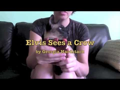 Elvis the Siamese Cat Talking to a Crow