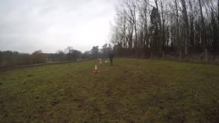 Cilla - English Springer Spaniel Cross