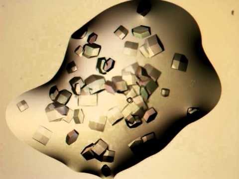 Lysozyme Crystal Growth Long Version
