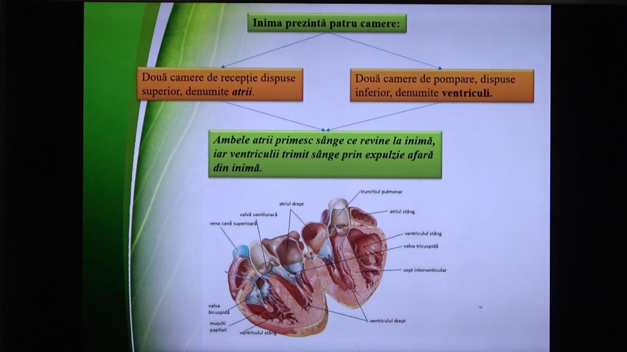 pierderea în greutate mitocondrială