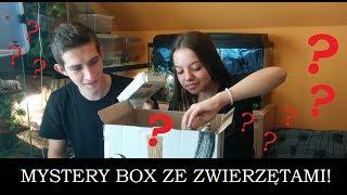 Mystery box ze zwierzętami! - paczka niespodzianka od widzów