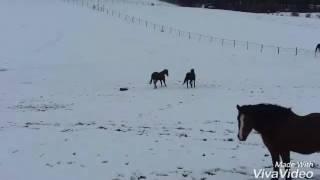 Les chevaux s'amusent dans la neige 😁