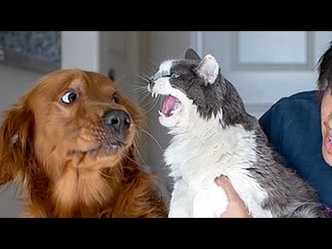 If you want to LAUGH HARD, WATCH FUNNY ANIMALS - Funny ANIMAL compilation