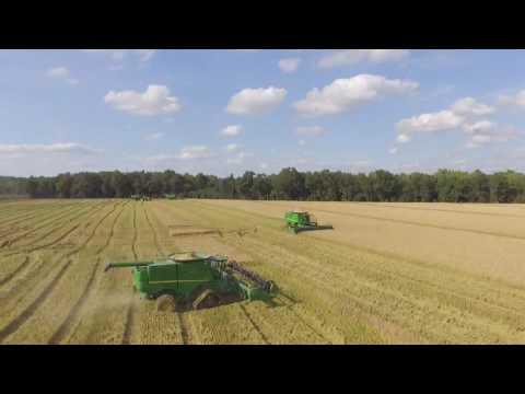 Mississippi Delta Rice harvesting