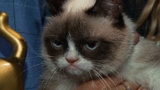 Repeat youtube video Grumpy Cat, meet Lil Bub; Lil Bub, meet Grumpy Cat