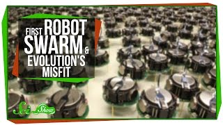 The First Robot Swarm, and Evolution's Misfit
