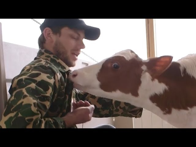 Manitowoc Minute: Life on Da Wisconsin Dairy Farm