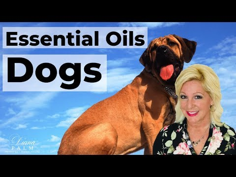 essential-oils-safe-for-dogs
