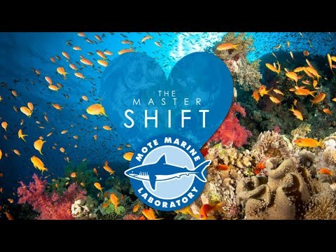 The Master Shift Charity Partner for 2018 is Mote Marine Laboratory!
