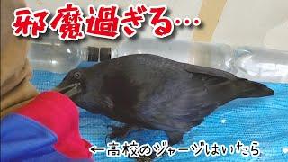 ペット記録チャンネル最新