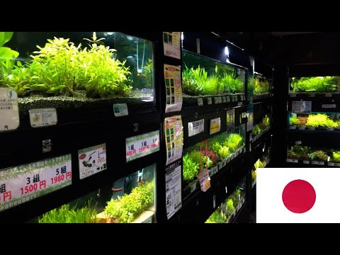 FISH STORE IN TRAIN STATION - Japan Fish Store Tour (Aqua Forrest)