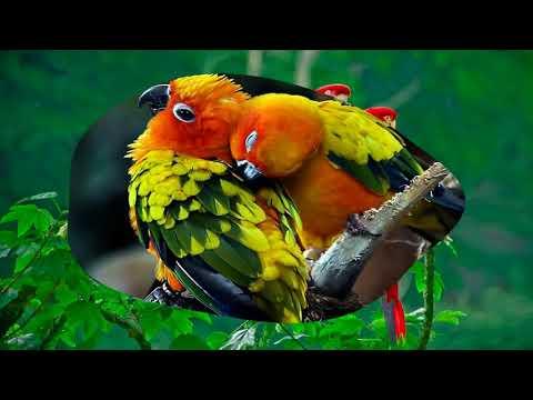 beautiful-love-birds-(hd1080p)