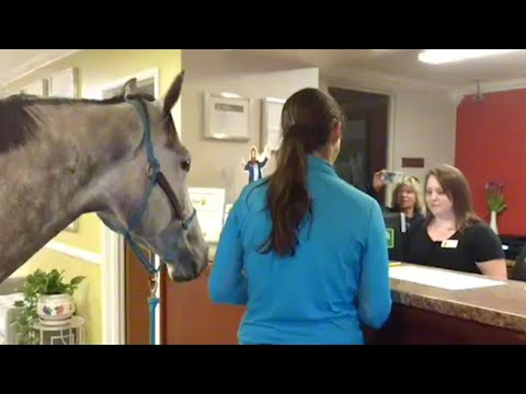 Woman Checks In to Pet-Friendly Motel With Her Horse
