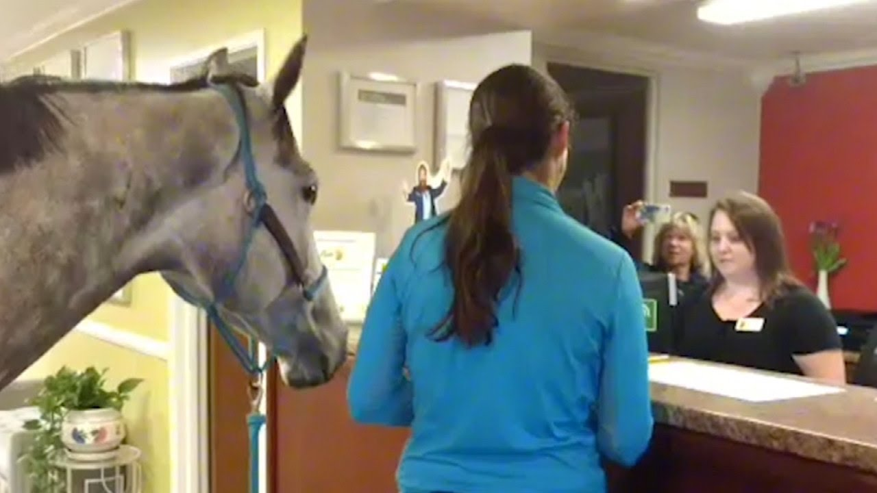 Woman Checks In To Pet Friendly Motel With Her Horse Youtube