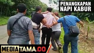 Aksi Penangkapan Napi Kabur Oleh Tim Resmob Polres Kendal