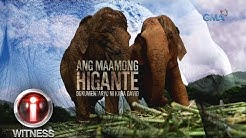 I-Witness: 'Ang Maamong Higante,' dokumentaryo ni Kara David (full episode)