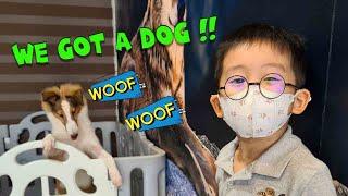 We Got A Dog!!   Meet Luna the Shetland Sheepdog