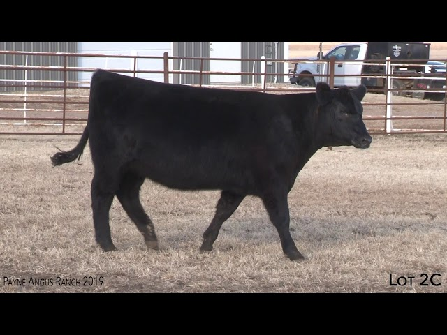 Payne Angus Ranch Lot 2C