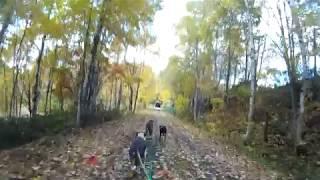 鷹栖町で紅葉の中ドッグトライクで走ってきました。 ブレーキトラブルが...