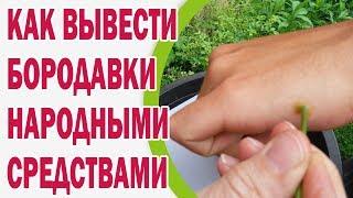 Как вывести бородавки народными средствами(, 2015-09-04T19:55:20.000Z)
