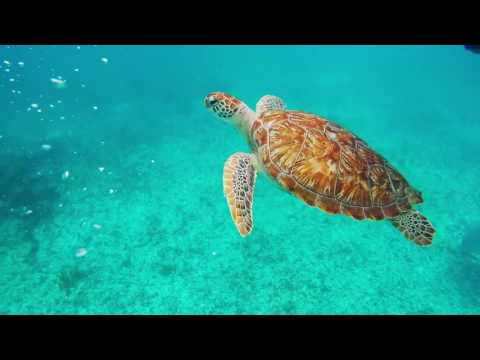 GoPro Cancun Mexico Holiday Proposal