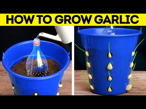 DIY Gardening Tips. Easy Ways To Grow Seeds. HACKS TO GROW YOUR OWN PLANTS