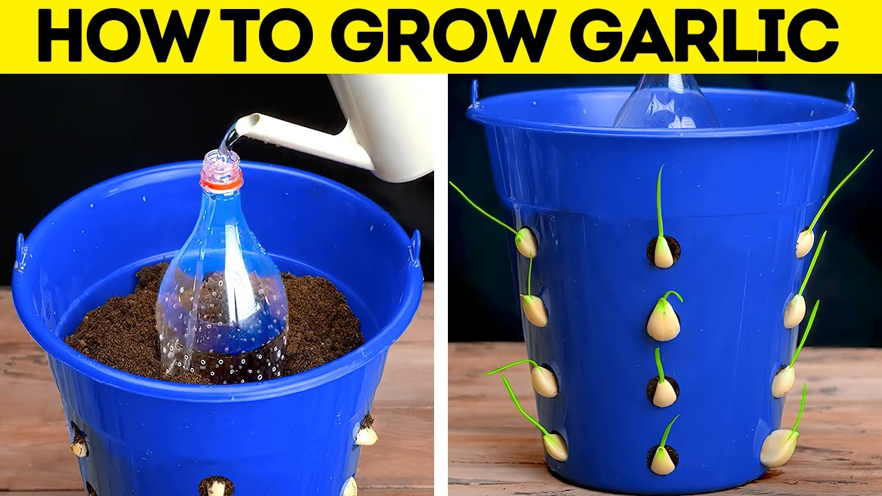 Download DIY Gardening Tips. Easy Ways To Grow Seeds. HACKS TO GROW YOUR OWN PLANTS