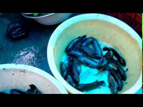 Local Fish Market at Puri ,Odisha ,India