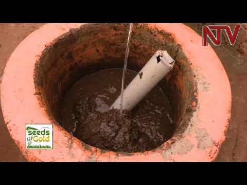 SEEDS OF GOLD: The uses of Cow Dung | 2018