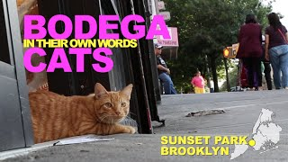 Bodega Cats In Their Own Words: Tiger and Nushi of Sunset Park, Brooklyn