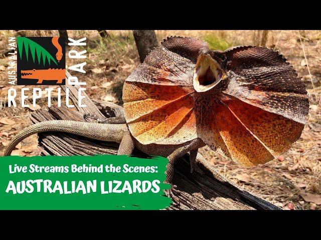 LIVE WITH AUSTRALIAN LIZARDS   AUSTRALIAN REPTILE PARK