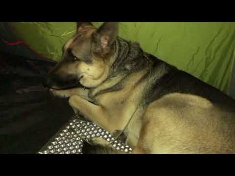 Backpack Camping 101: Where does the dog Sleep pt.11
