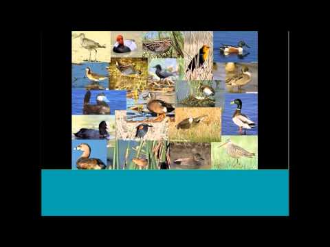 High Resolution Climate Models to Benefit Avian Conservation