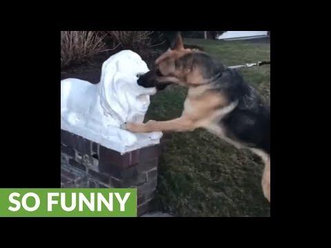 German shepherd attacks marble lions