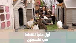 ملجأ للقطط في مدينة الخليل - قصة دنيا فلسطين
